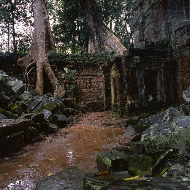 ruina en bosque
