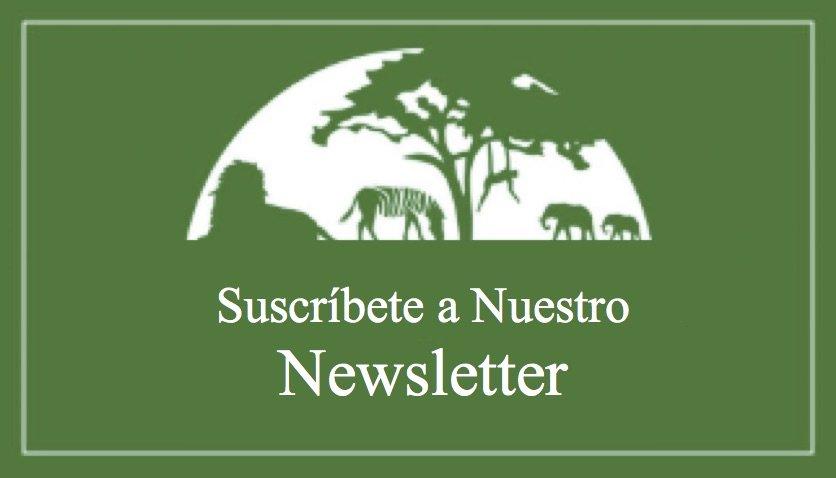 spanish newsletter banner