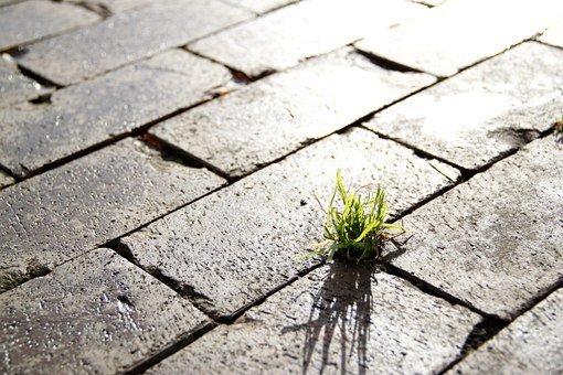 una planta en la calle