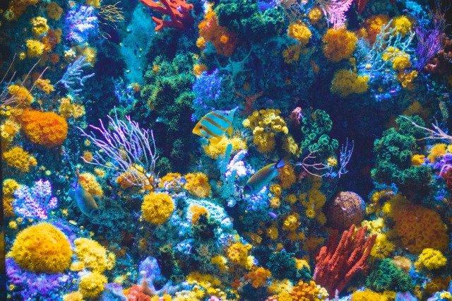 el Arrecife de Coral