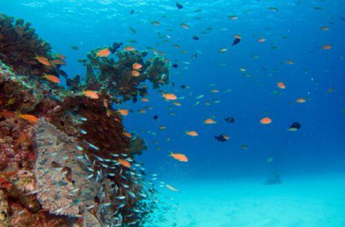 peces y colares