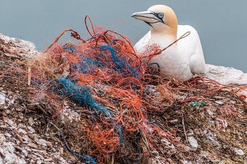 net and bird