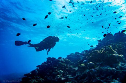 From diving vacations to eco diving
