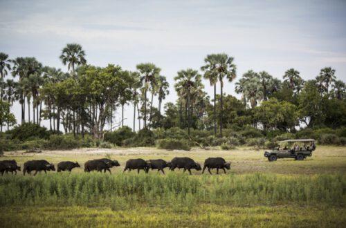 Hoteles Sostenibles de Safari de Lujo en África