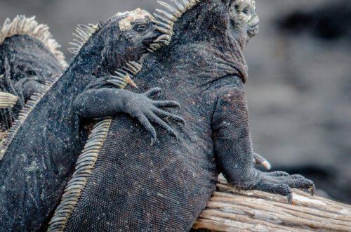 ガラパゴス諸島での環境に配慮した旅行