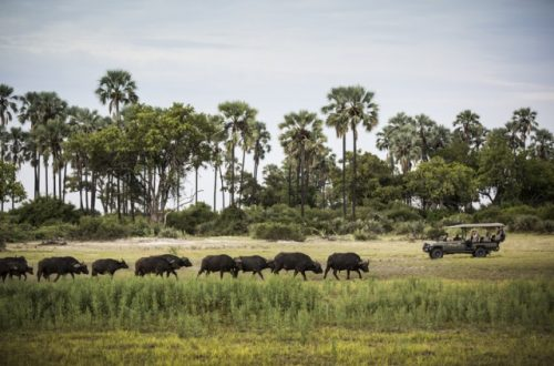 アフリカでサファリに泊まる!サステナブルでラグジュアリーなサファリホテルを体験しよう
